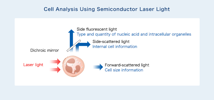 Cell Measurement Technologies | Research & Development | Sysmex